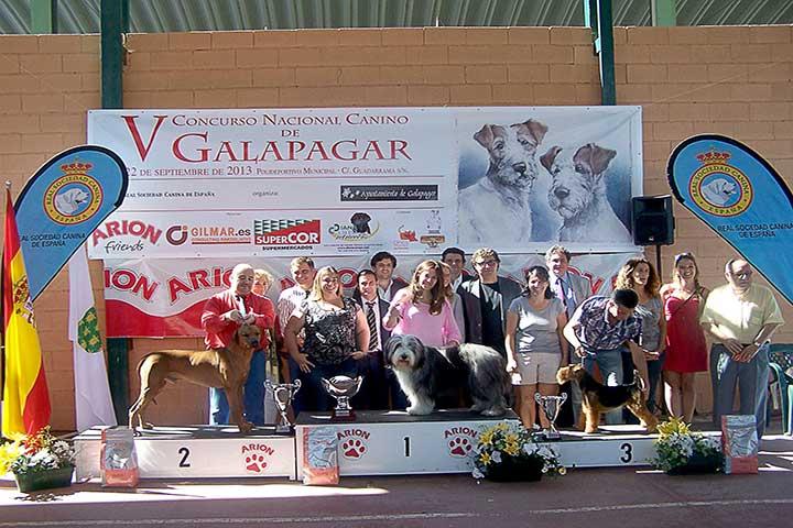 concurso-canino-galapagar