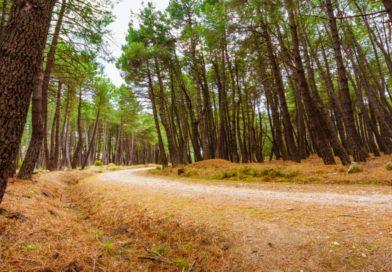 La Comunidad regula la gestión y los usos públicos del Parque Nacional de la Sierra de Guadarrama