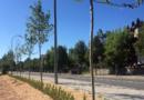 El Escorial planta  nuevos árboles y revisa el estado de sus encinas centenarias